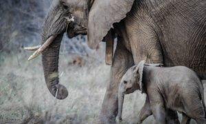 Wildlife Care Foundation - Gutes tun ohne einen Cent dafür ausgeben zu müssen